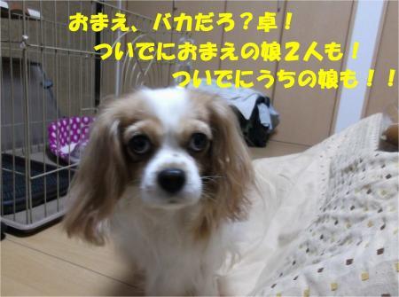 04_convert_20121126180331.jpg