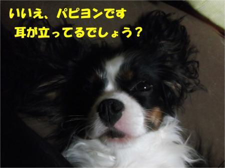 04_convert_20121127174804.jpg