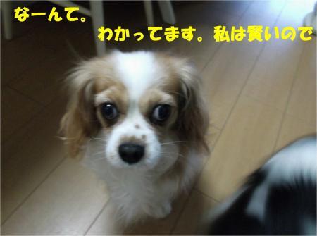 04_convert_20121204181920.jpg