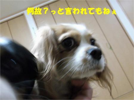 04_convert_20121210174643.jpg