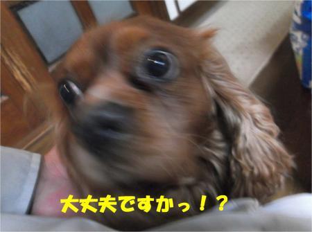 04_convert_20140130182924.jpg