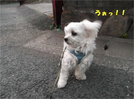 04_convert_20140201195648.jpg