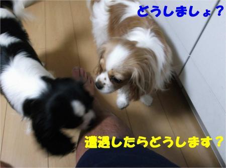 05_convert_20120611180833.jpg