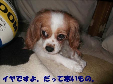 05_convert_20121206183917.jpg