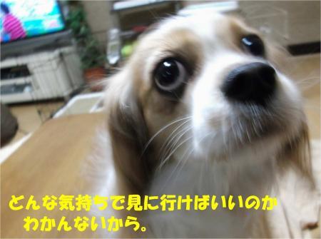 05_convert_20121207195048.jpg