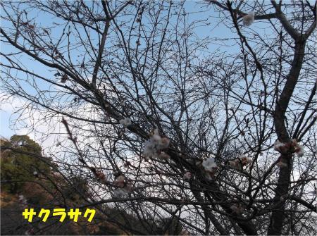05_convert_20140118165500.jpg