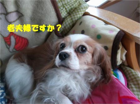 05_convert_20140124194236.jpg