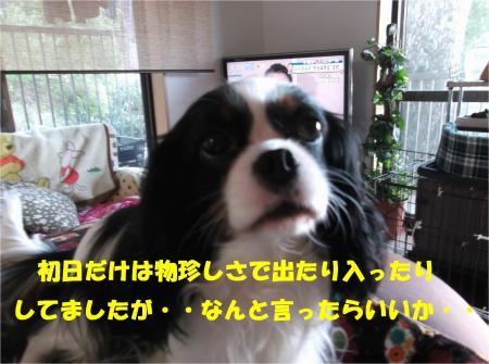 05_convert_20140128181601.jpg