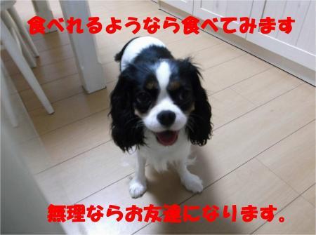 06_convert_20120611180858.jpg