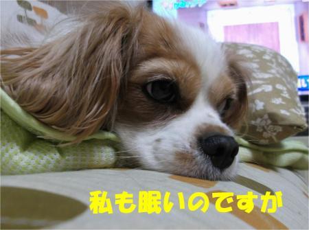 06_convert_20121026174455.jpg