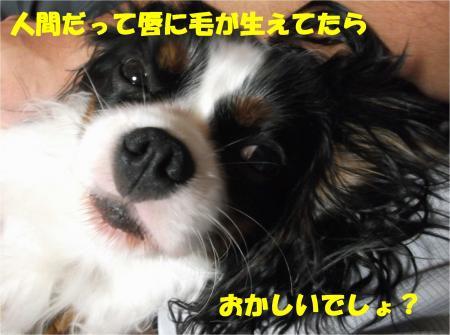 06_convert_20121108173414.jpg