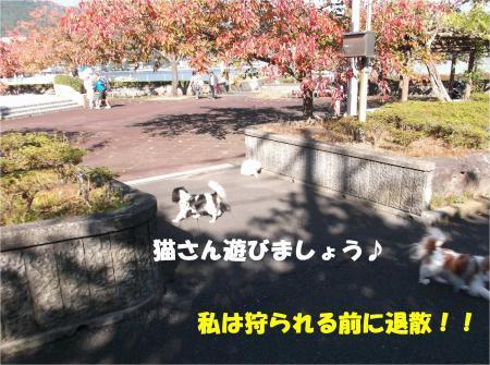06_convert_20121112172732.jpg