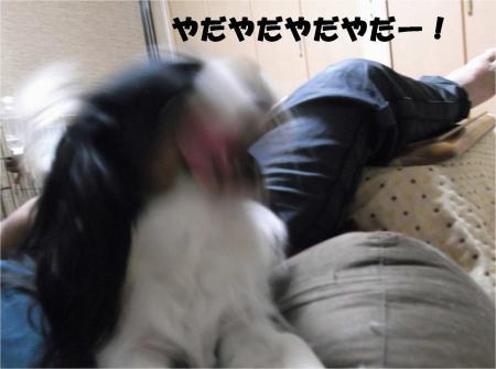 06_convert_20121114181016.jpg