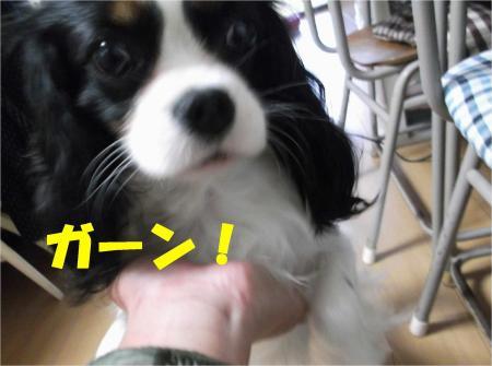 06_convert_20121204181945.jpg