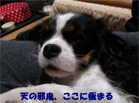06_convert_20121206183932.jpg