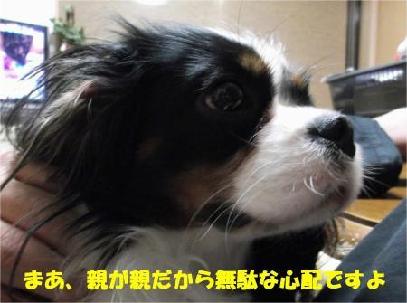 06_convert_20121207195114.jpg