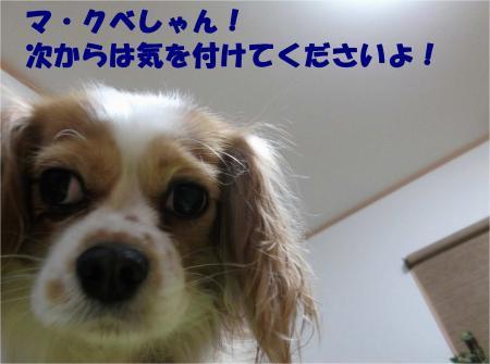 06_convert_20121210174708.jpg