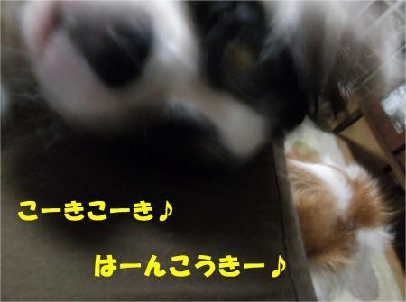 07-2_convert_20121114181027.jpg
