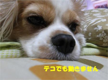 07_convert_20121026174507.jpg