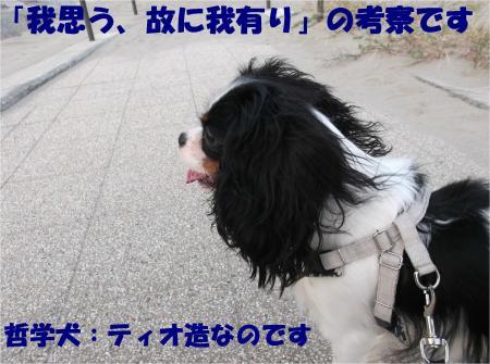 07_convert_20121029173624.jpg