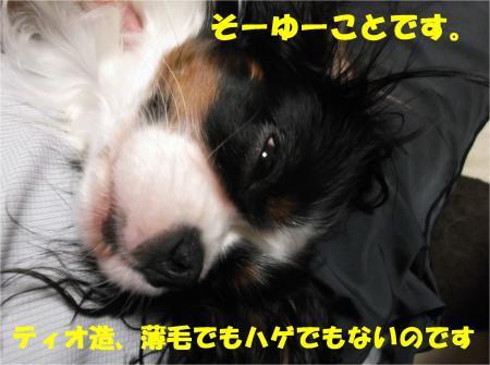 07_convert_20121108173428.jpg