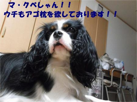 07_convert_20121116155354.jpg
