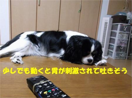07_convert_20121126180408.jpg