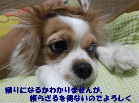 07_convert_20121127174848.jpg