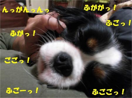 07_convert_20121128173104.jpg