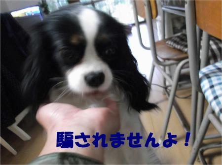 07_convert_20121204181956.jpg
