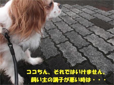 07_convert_20140130182956.jpg