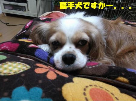 07_convert_20140204193028.jpg