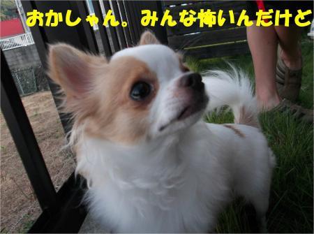 08_convert_20121009182526.jpg