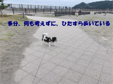 09_convert_20121112172811.jpg