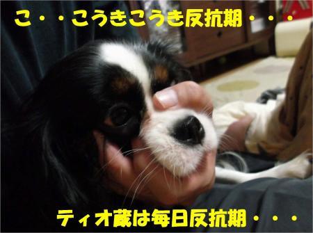 09_convert_20121114181056.jpg
