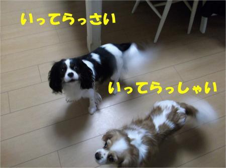 09_convert_20121204182023.jpg
