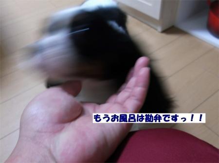 010_convert_20120419175246[1]