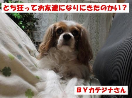 01_convert_20120502170020[1]