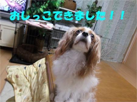 06_convert_20120515181322[1]