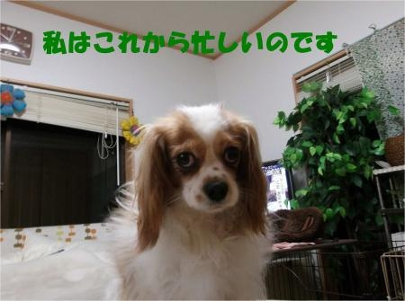 04_convert_20120523164229[1]