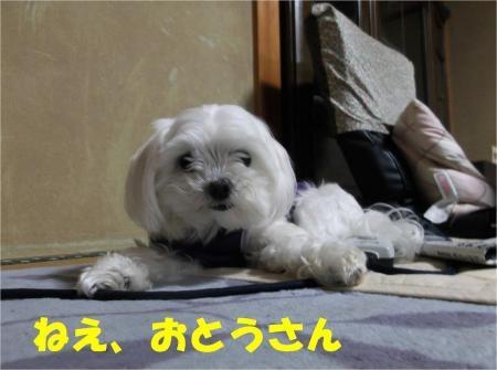 01_convert_20120525182309[1]