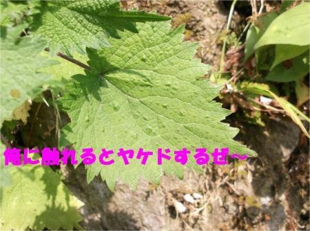02_convert_20120530172632[1]