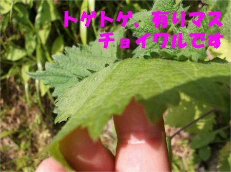 03_convert_20120530172703[1]