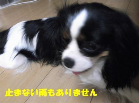 06_convert_20120530172845[1]