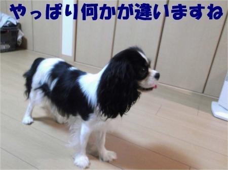 07_convert_20120531180610[1]