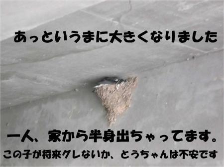 08_convert_20120531180642[1]