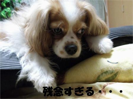 06_convert_20120604172531[1]