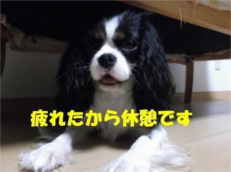 03_convert_20120605172539[1]