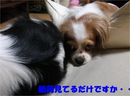 013_convert_20120613165203[1]