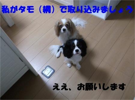 08_convert_20120627210339[1]